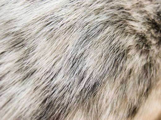 texture fur animal background - photo #49