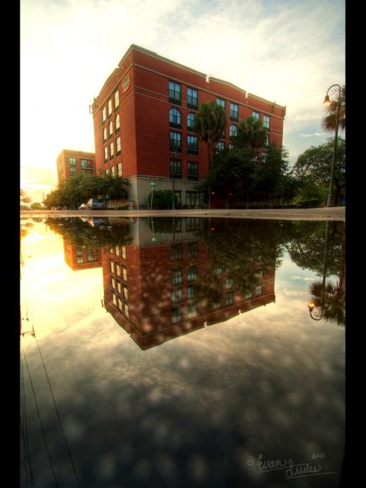 Savannah Reflections