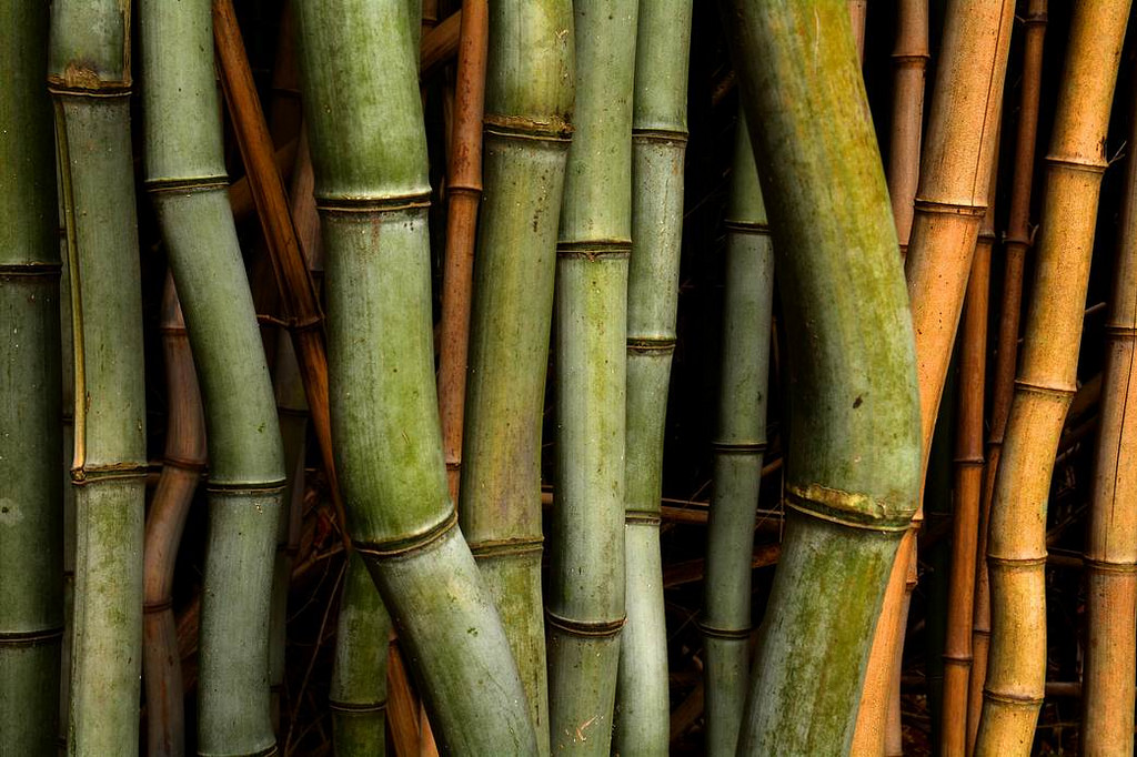 bamboo texture designs