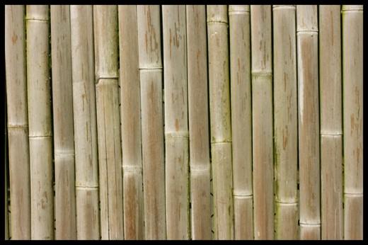 Bamboo Texture by Maxidius