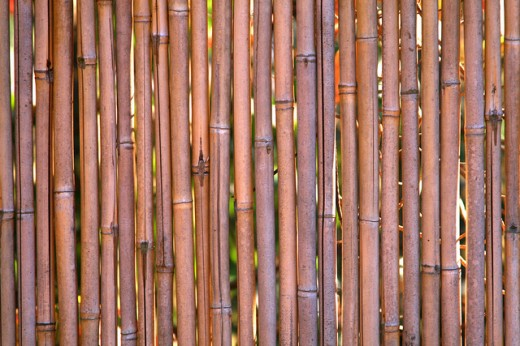 Bamboo Textures by Lvy Dawnes