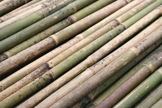 Bamboo by Byte