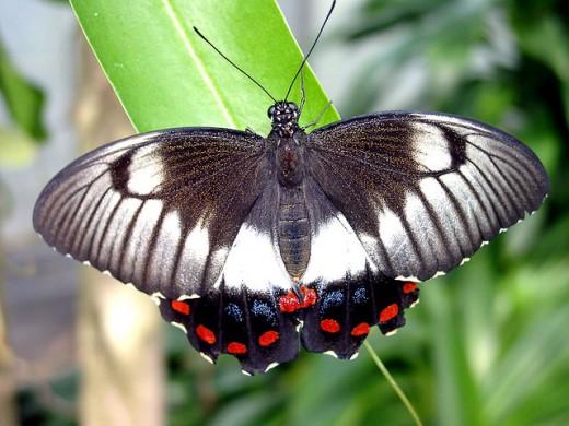Butterfly-Islands Mainau