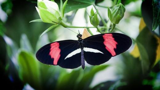 Butterfly Wallpaper for Desktop