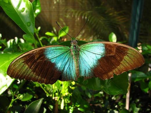 Butterfly by Dumbskull