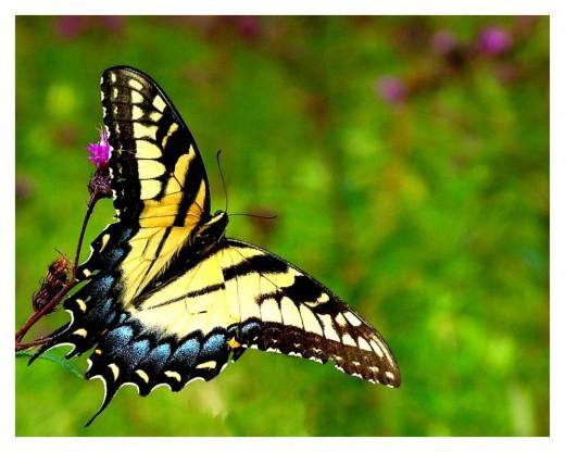 Butterfly by Dystopian Optimist
