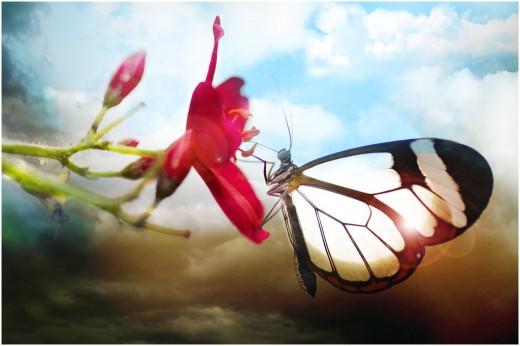 Butterfly by Gadddd