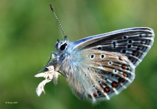 Butterfly by Slinky 2012