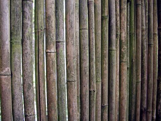Free Bamboo Texture