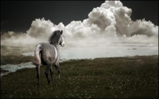 Horse Manipulation Wallpaper