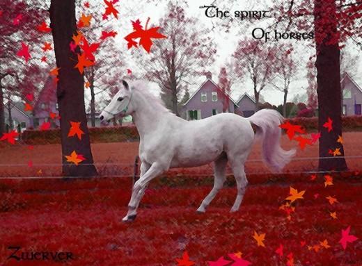 Horse Wallpaper by MissSlytherin