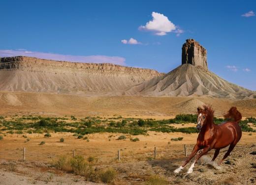 Horse by MajaAmy