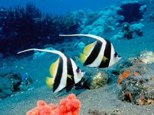 Lovely Marine Specimens
