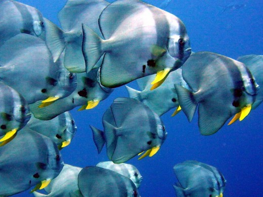 Tropic Fish Shoal