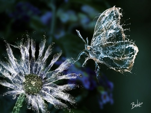 Water Butterfly and Flower