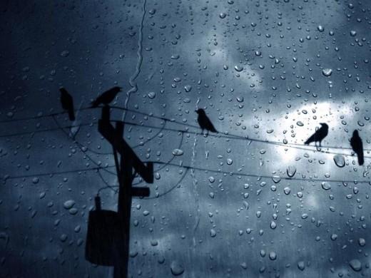 Bird of rain