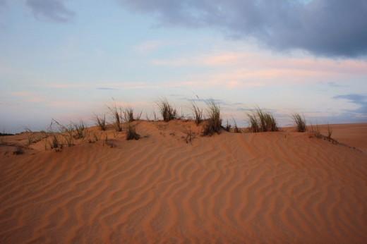 Desert Stock 2