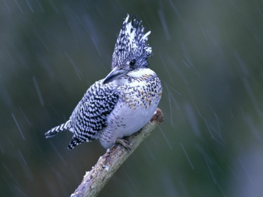 Lovely Bird in the Rain