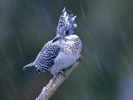 Lovely Bird in the Rain