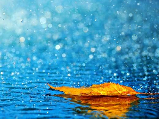 Rain Wallpaper for Desktop