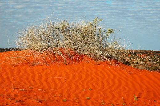 Simpson Desert Scrub