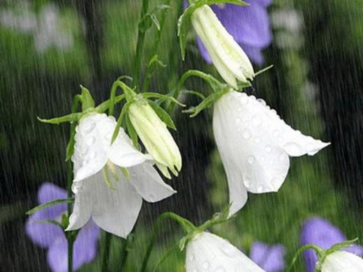 bells in rain