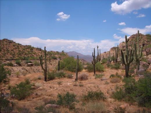 classic desert