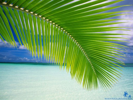 Beach Palm Leaf