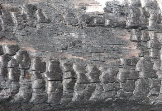 Charcoaled Wood 1