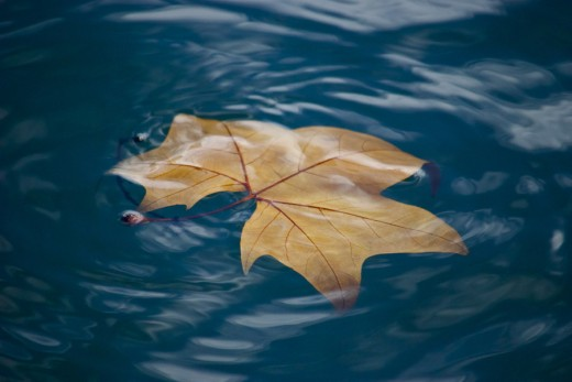 Leaf on the Water Wallpaper