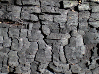 30 Free Burnt Wood Texture Designs