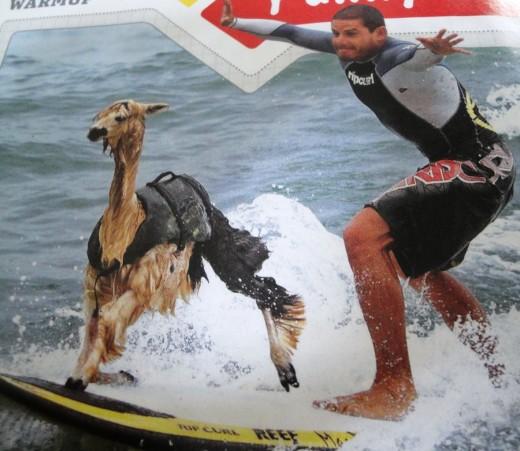 Surfing Llama