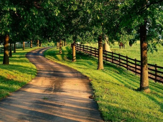 Country Road Through Horse Farms